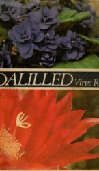 Toalilled - Virve Roost